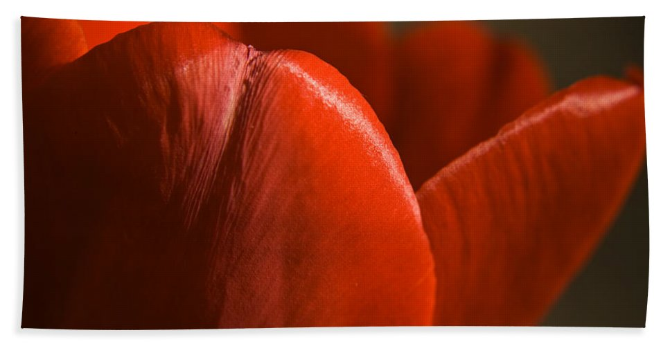Tulip Bath Sheet featuring the photograph Red Tulip Up Close by Teresa Mucha