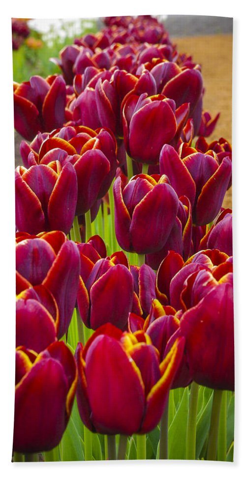Bulb Hand Towel featuring the photograph Red Tulips by John Trax