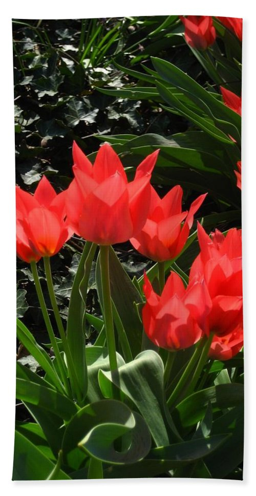 Flowers Bath Sheet featuring the photograph Red Tulips by Sherry Oliver