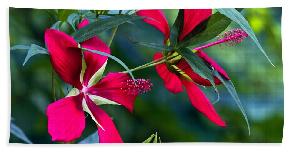 Fine Art Photo Bath Sheet featuring the photograph Red Twins One by Ken Frischkorn
