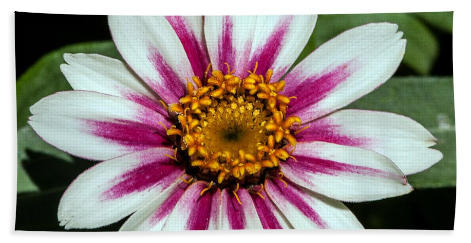 Flower Bath Sheet featuring the photograph Red White And Yellow Flower by John Haldane