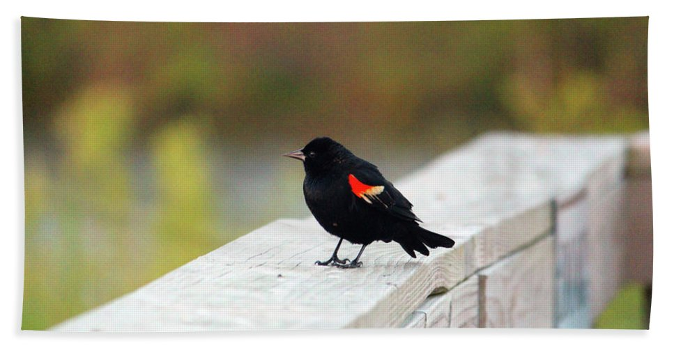 Red-winged Blackbird Hand Towel featuring the photograph Red Winged Blackbird by Cynthia Guinn