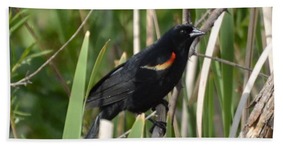 Red Hand Towel featuring the photograph Red-winged Blackbird by Wendy Fox