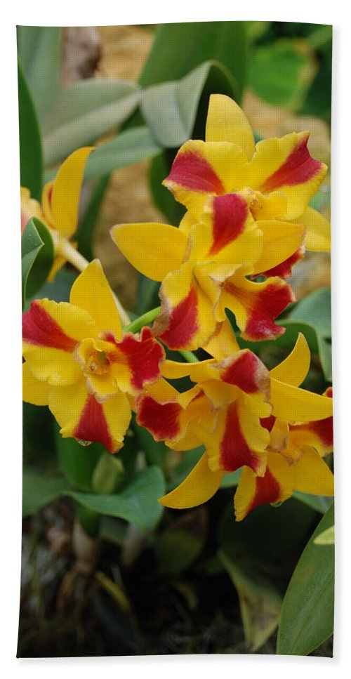 Macro Hand Towel featuring the photograph Red Yellow Orchids by Rob Hans