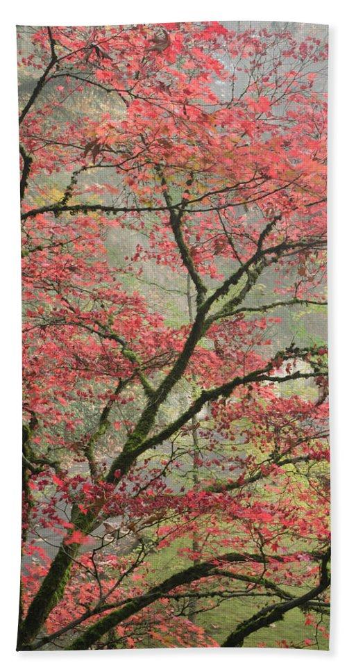 Maple Bath Sheet featuring the photograph Red Zen by Don Schwartz