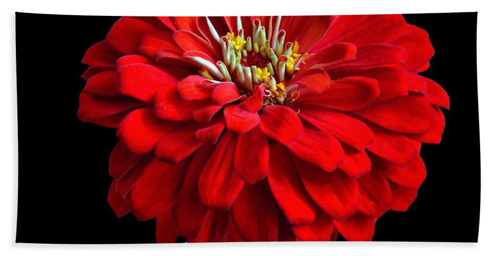 Flower Hand Towel featuring the photograph Red Zinnia by Sandy Keeton