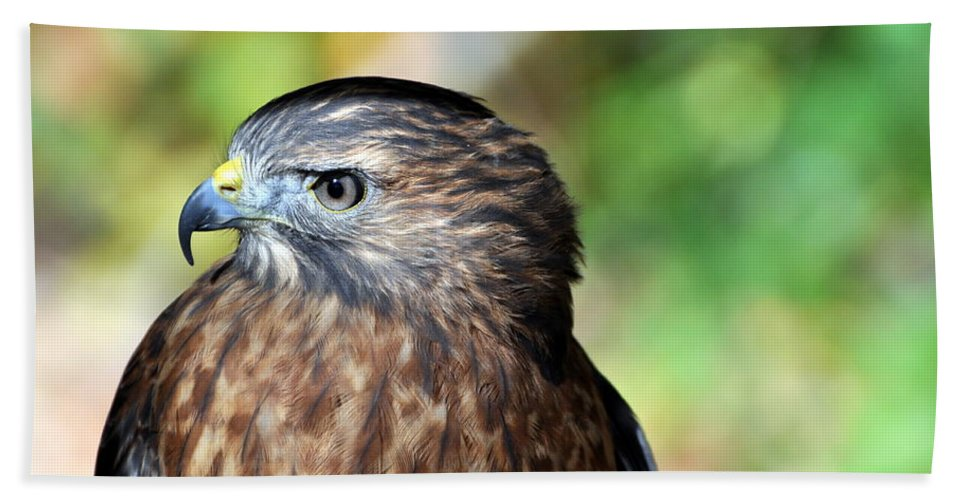 Redtail Hawk Bath Sheet featuring the photograph Redtail by Marty Koch