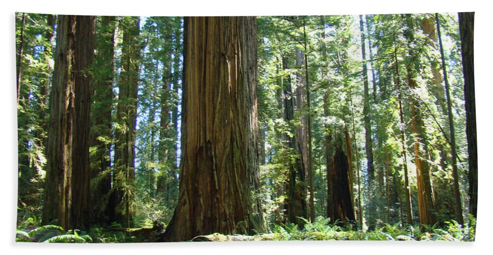 Redwood Bath Towel featuring the photograph Redwood Trees Forest California Redwoods Baslee by Baslee Troutman