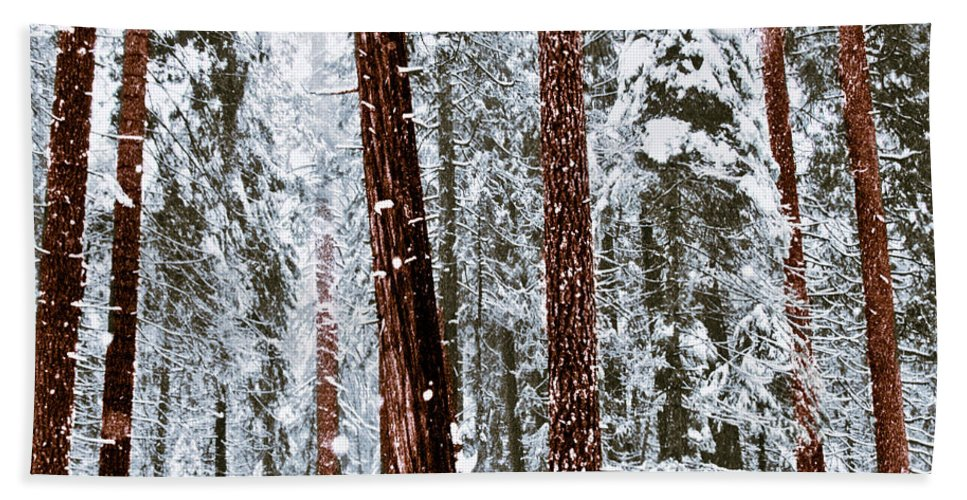 Landscape Bath Towel featuring the photograph Redwoods In Snow by Karen W Meyer