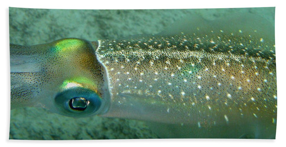 Underwater Bath Sheet featuring the photograph Reef Squid by Kimberly Mohlenhoff