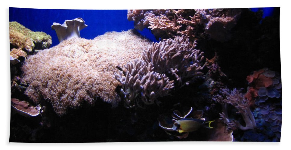Reef Hand Towel featuring the photograph Reef Tank by Sarah Houser