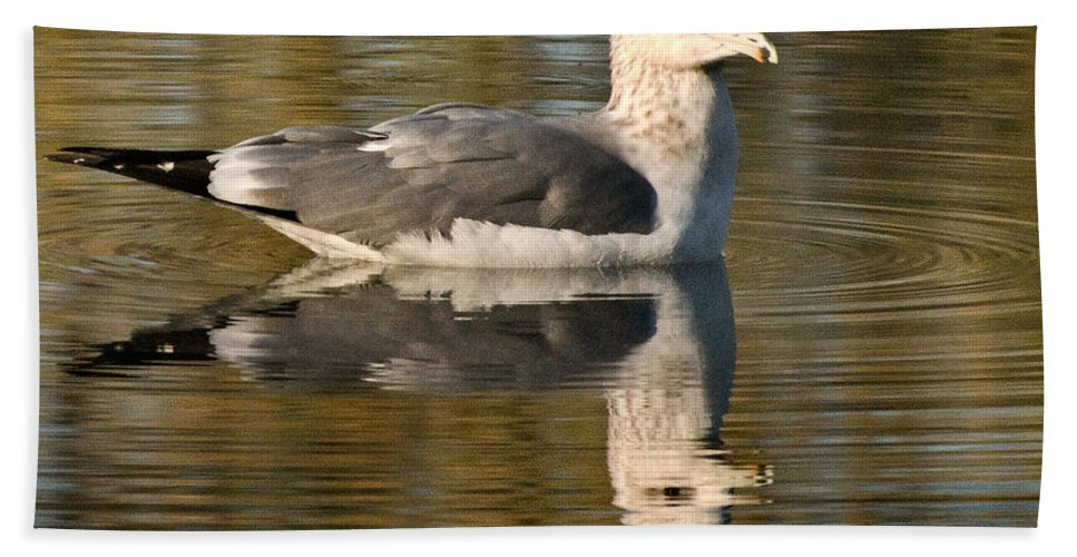 California Scenes Hand Towel featuring the photograph Young Gull Reflections by Norman Andrus
