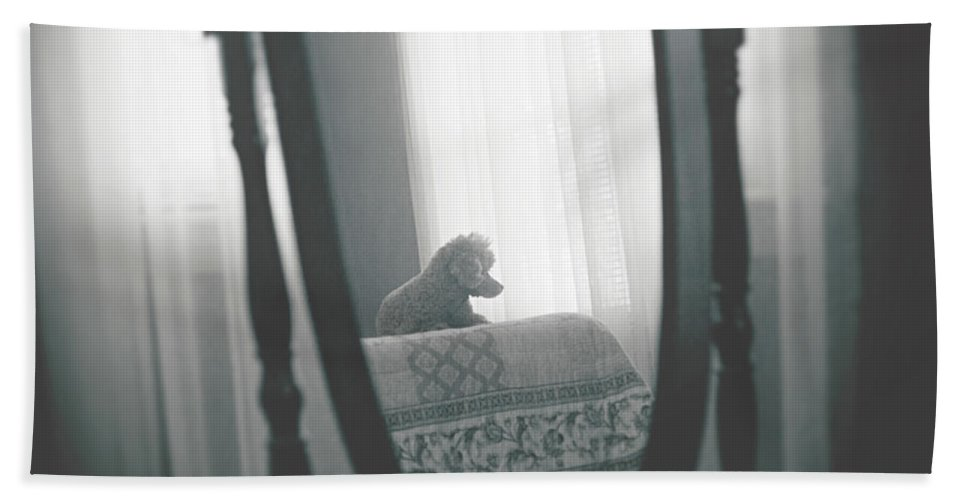 Animals Hand Towel featuring the photograph Reflection by Sue Collura