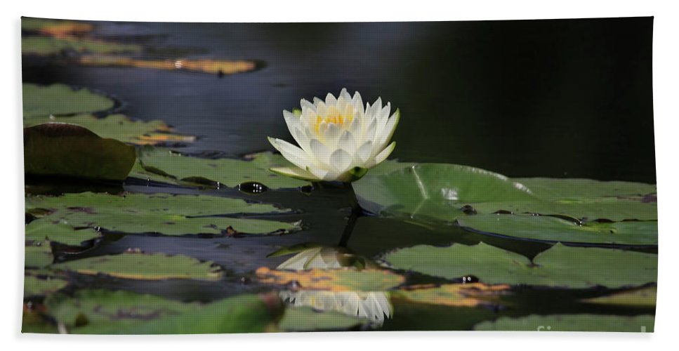 Lilly Hand Towel featuring the photograph Reflective Lilly by Deborah Benoit