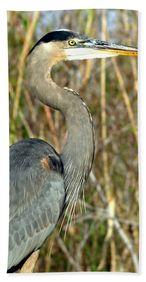 Heron Bath Towel featuring the photograph Regal Heron by Marty Koch