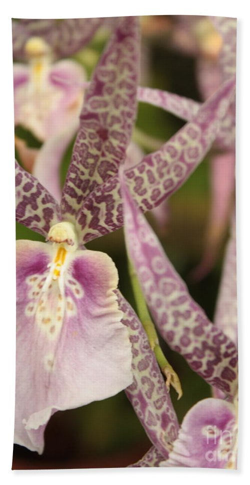 Phalaenopsis Bath Sheet featuring the photograph Regal Orchids by Carol Groenen
