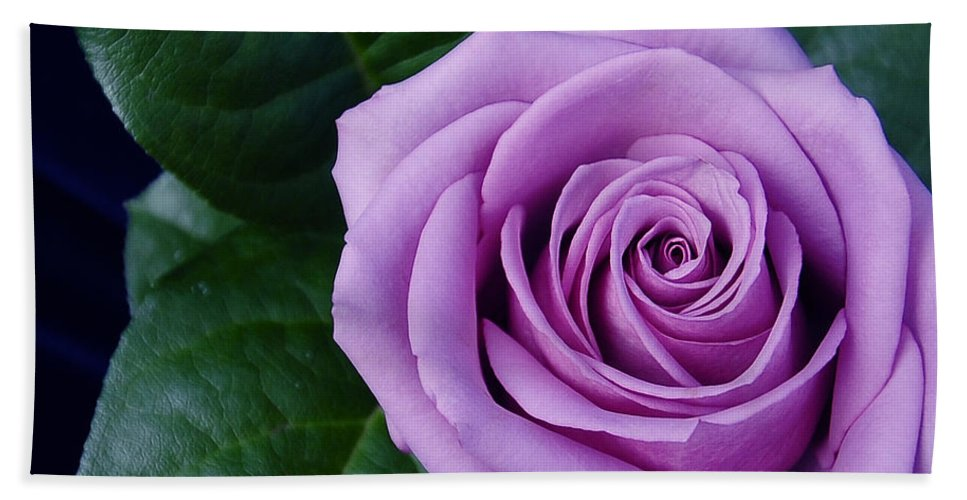 Flowers Bath Sheet featuring the photograph Regal Rose I Purple Rose by Terri Winkler