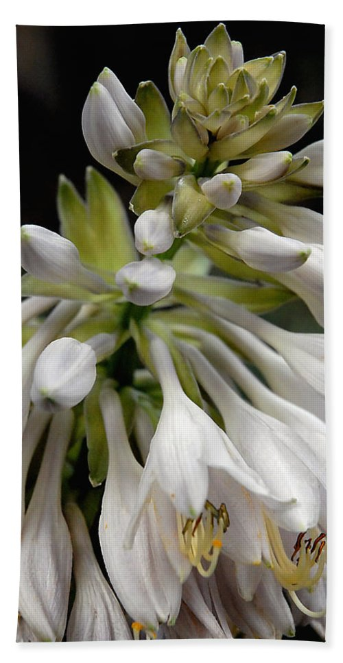 Hosta Hand Towel featuring the photograph Renaissance Lily by Marie Hicks