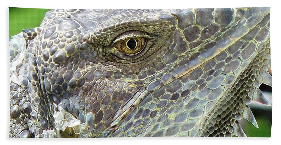 Iguana Hand Towel featuring the photograph Reptilian by Carlos Amaro