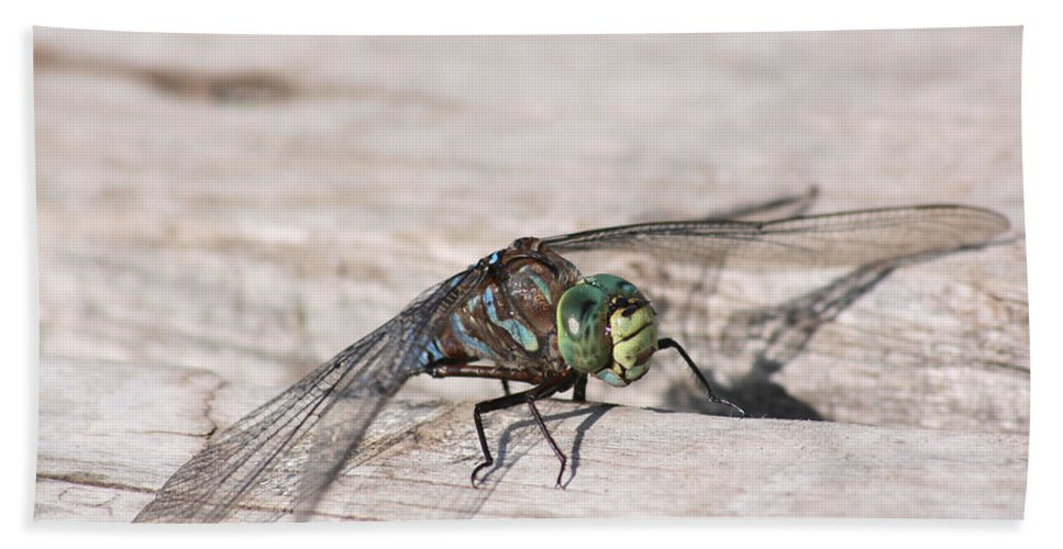 Dragonfly Nature Bug Flying Insect Wings Eyes Colorful Creature Hand Towel featuring the photograph Rescued Dragonfly by Andrea Lawrence