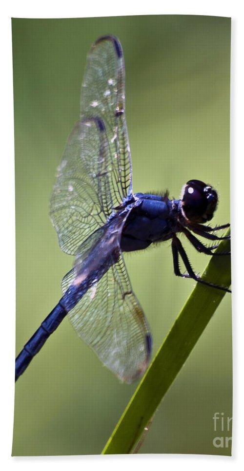 Dragonfly Bath Sheet featuring the photograph Rest Time by Ken Frischkorn