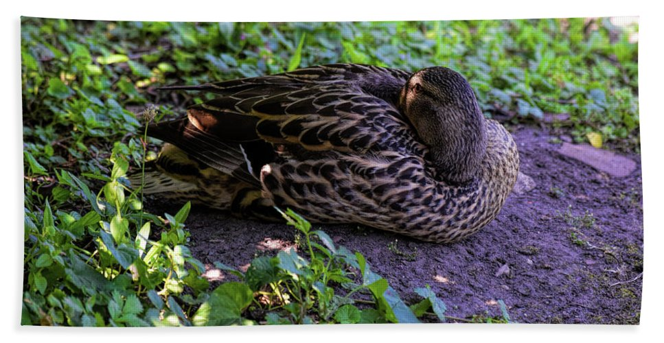 Mallard Hand Towel featuring the photograph Resting But Alert by William Tasker