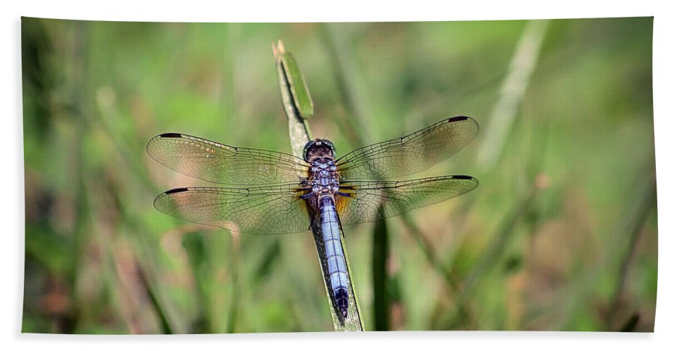 Dragonfly Hand Towel featuring the photograph Resting In The Green by Kerri Farley