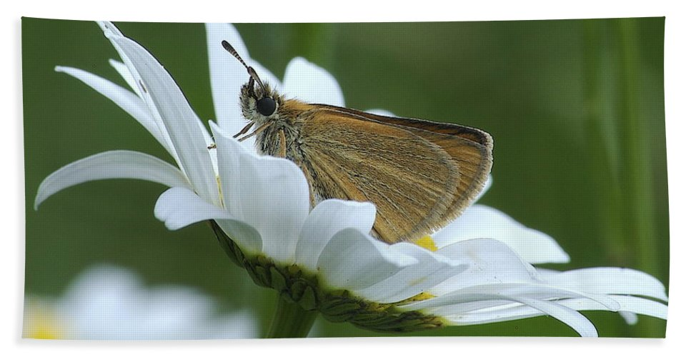 Daisy Hand Towel featuring the photograph Resting Place by Michael Peychich