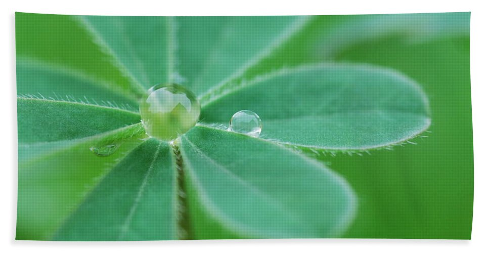 Plant Hand Towel featuring the photograph Retaining Water by Donna Blackhall