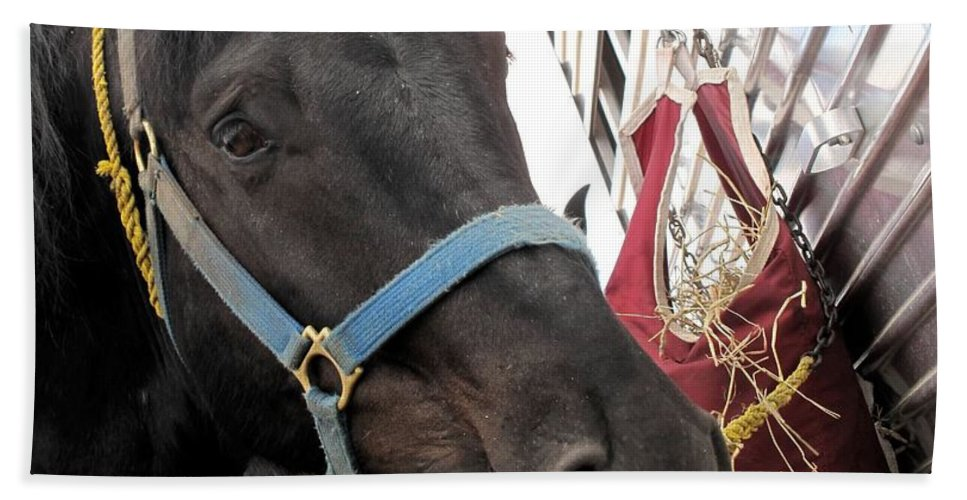 Horse Hand Towel featuring the photograph Reward For A Job Well Done by Ian MacDonald