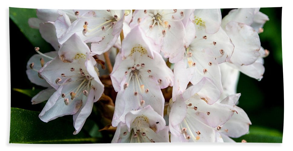 Flower Hand Towel featuring the photograph Rhododendron Family Of Flowers by John Haldane