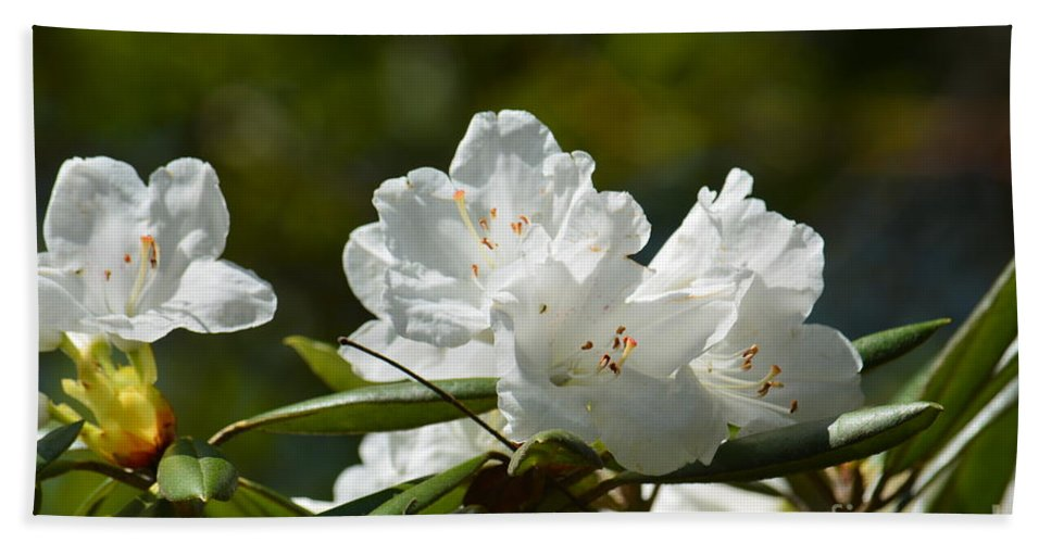 Rhododendron Ii Hand Towel featuring the photograph Rhododendron II by Maria Urso