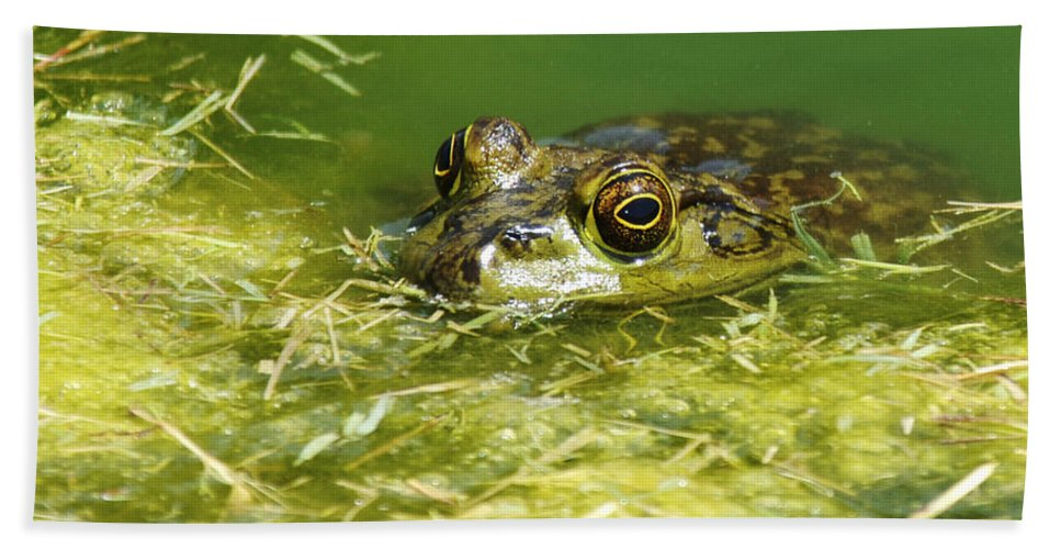 Frog Bath Towel featuring the photograph Ribbit by Jill Reger