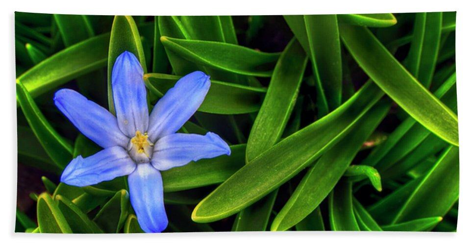 Backyard Bath Sheet featuring the photograph Ribbons Of Spring by Evelina Kremsdorf