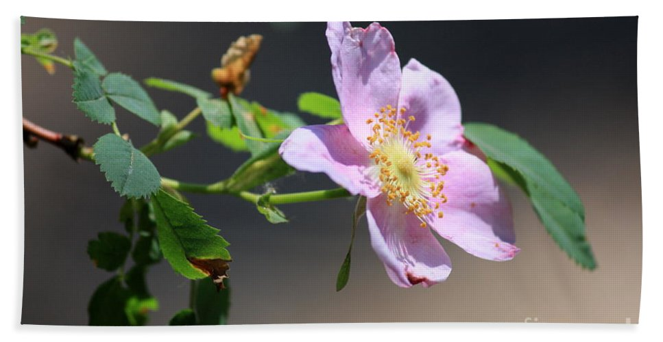 Floral Bath Sheet featuring the photograph Rimrock Rose by Carol Groenen