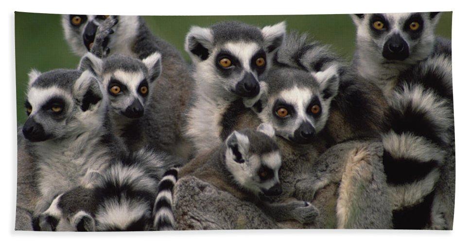 Mp Bath Towel featuring the photograph Ring-tailed Lemur Lemur Catta Group by Gerry Ellis