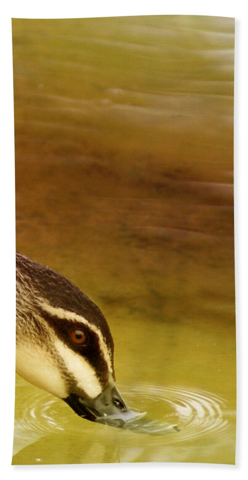 Animals Bath Sheet featuring the photograph Ripples by Holly Kempe