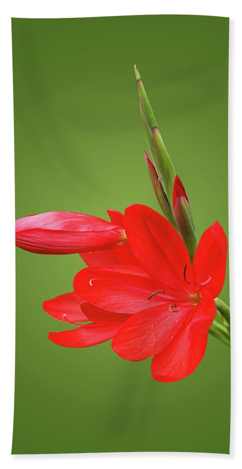 Red Lily Bath Sheet featuring the photograph Ritzy Red by Gill Billington