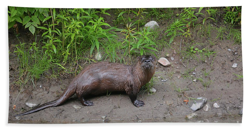Deanna Cagle Bath Sheet featuring the photograph River Otter by Deanna Cagle