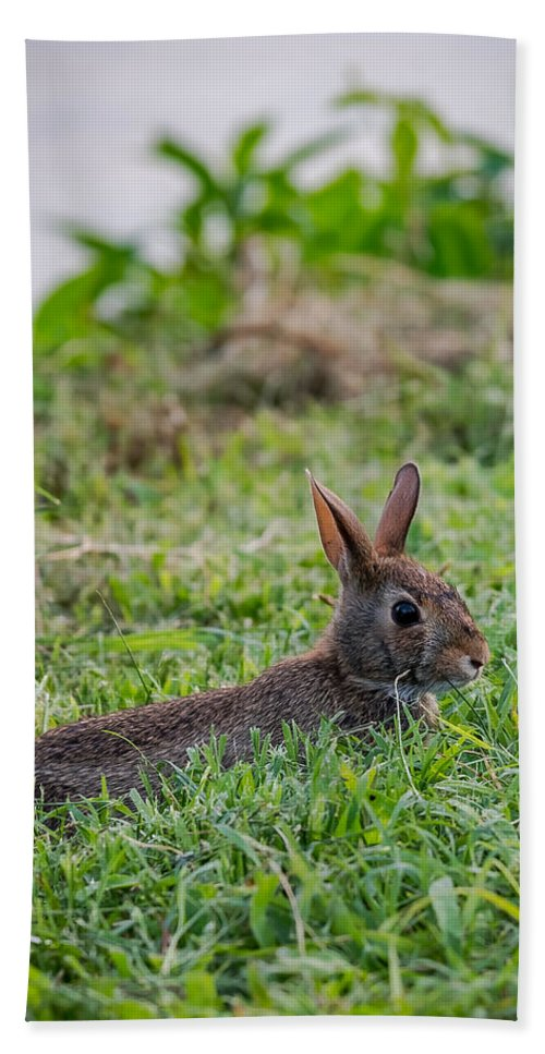 Rabbit Hand Towel featuring the photograph River Rabbit by Jan M Holden