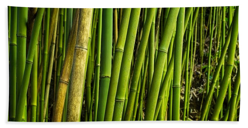 Road To Hana Hand Towel featuring the photograph Road To Hana Bamboo Panorama - Maui Hawaii by Brian Harig