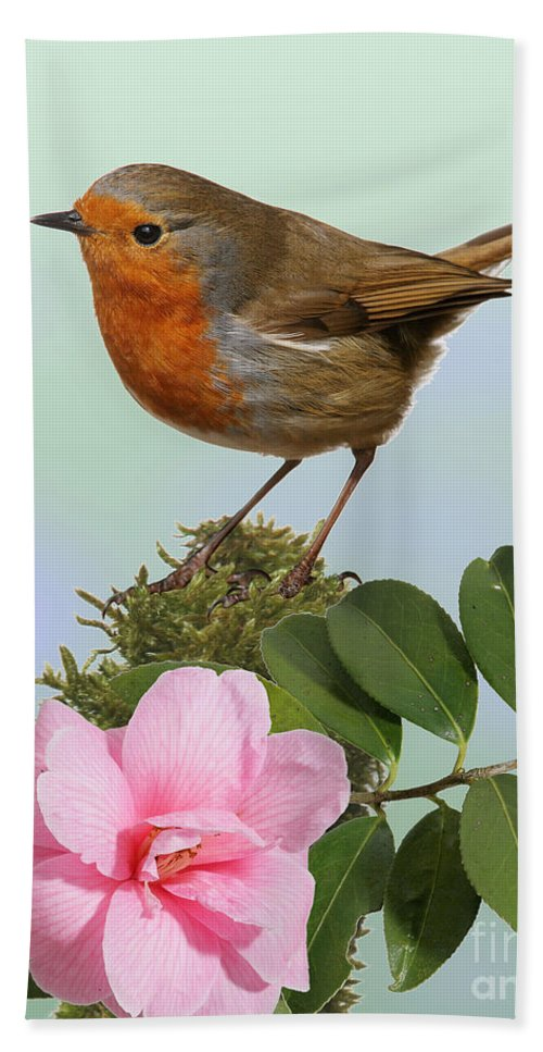 Erithacus Rubecula Hand Towel featuring the photograph Robin And Camellia Flower by Warren Photographic