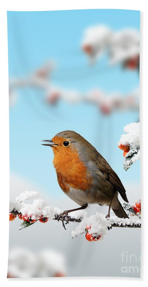 European Robin Hand Towel featuring the photograph Robin And Cotoneaster With Snow by Warren Photographic