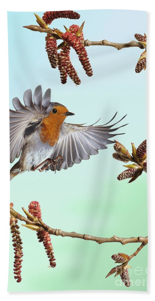 Erithacus Rubecula Hand Towel featuring the photograph Robin And Poplar by Warren Photographic