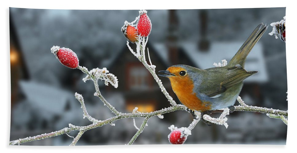 European Robin Hand Towel featuring the photograph Robin And Rose Hips by Warren Photographic
