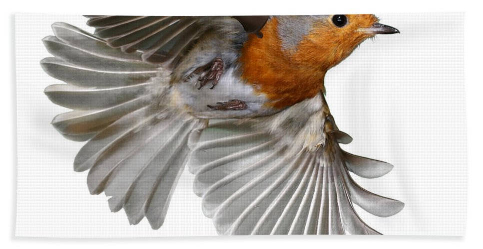 European Robin Hand Towel featuring the photograph Robin In Flight by Warren Photographic