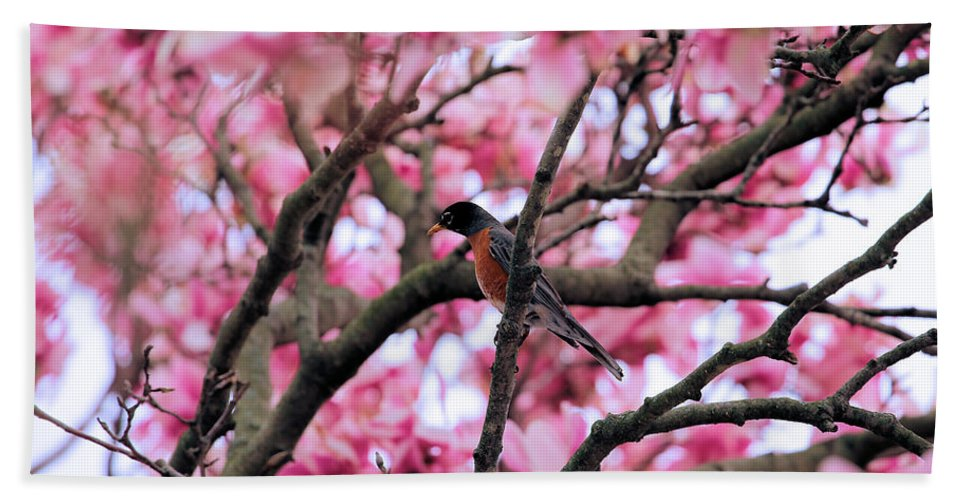 Magnolia Hand Towel featuring the photograph Robin In Magnolia Tree by Theresa Campbell