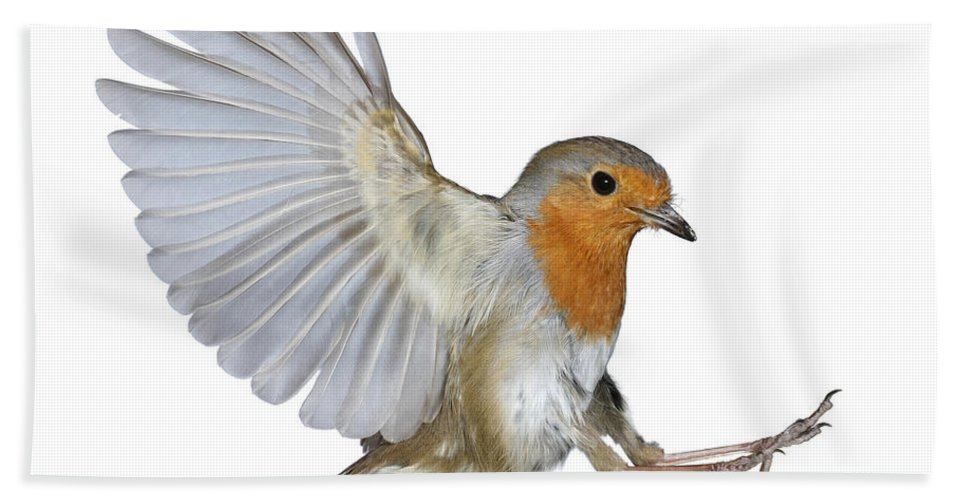 Erithacus Rubecula Hand Towel featuring the photograph Robin Landing by Warren Photographic