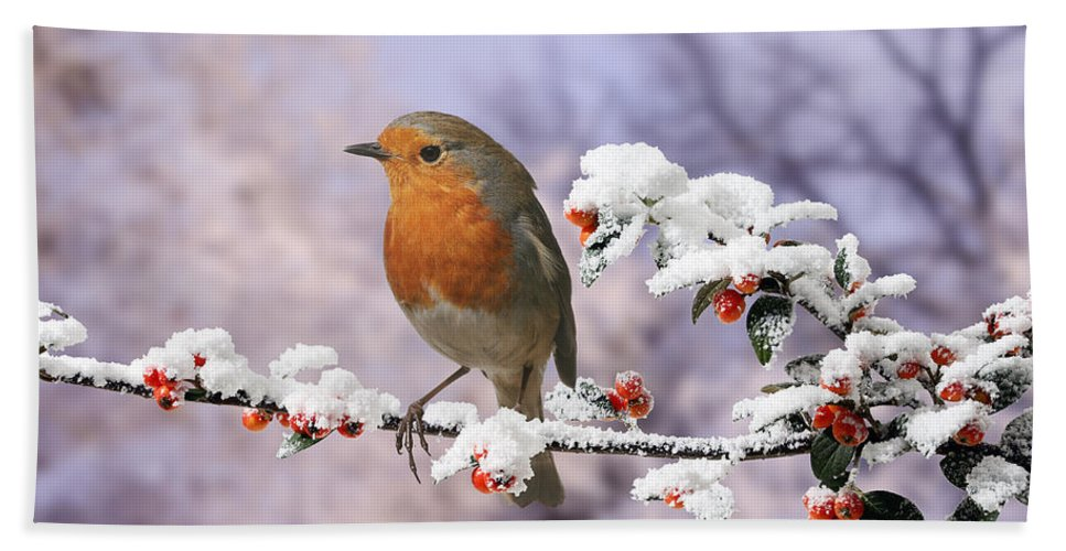 European Robin Hand Towel featuring the photograph Robin On Cotoneaster With Snow by Warren Photographic