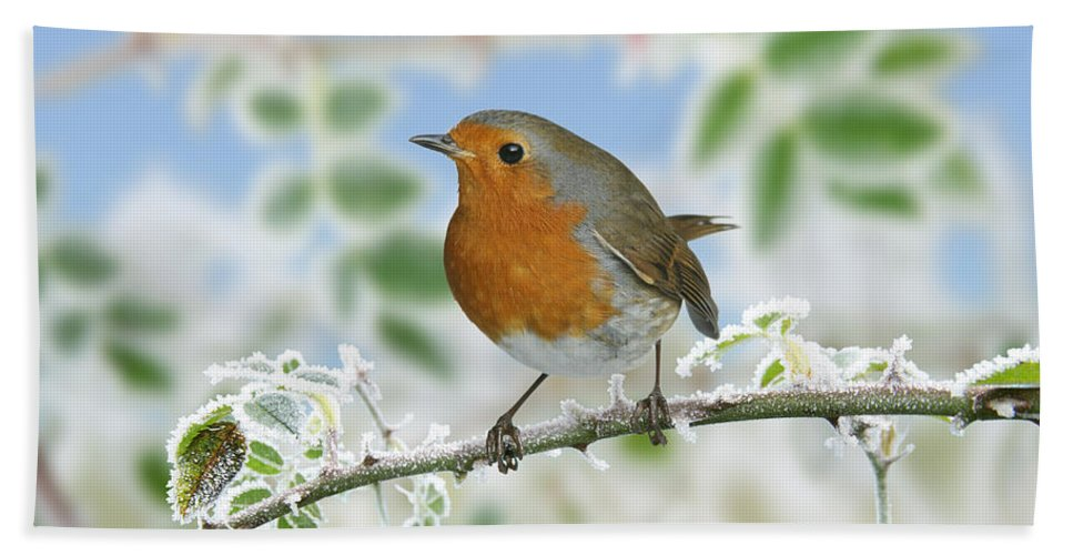 European Robin Hand Towel featuring the photograph Robin On Frosty Briar by Warren Photographic